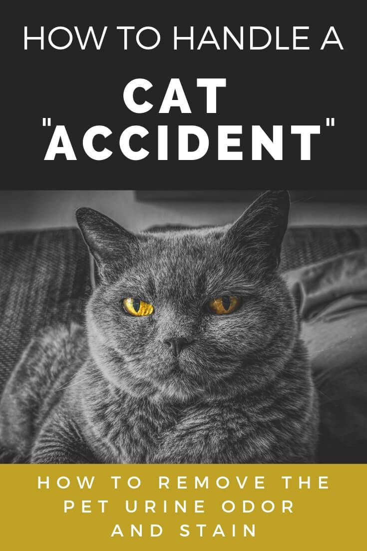 """How To Handle A Cat """"Accident"""""""