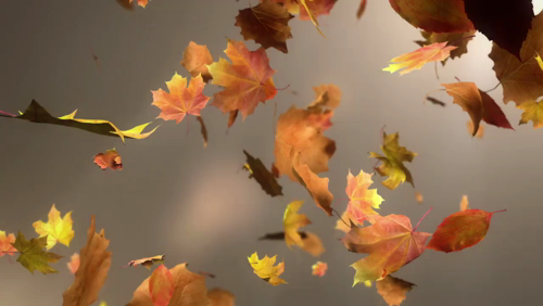 This Videoad Has Us Falling Make Your Professional Video Now Https Slide Ly Promo Https Video Buffer Com V 5808a082c80b27e5 Autumn Leaves Fall Leaves
