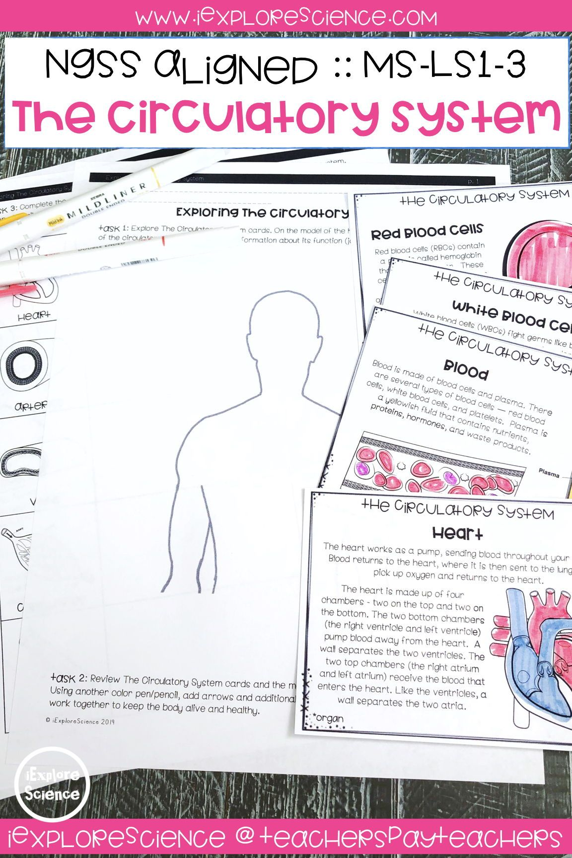 Exploring The Circulatory System Activity Bundle Ms Ls1 3
