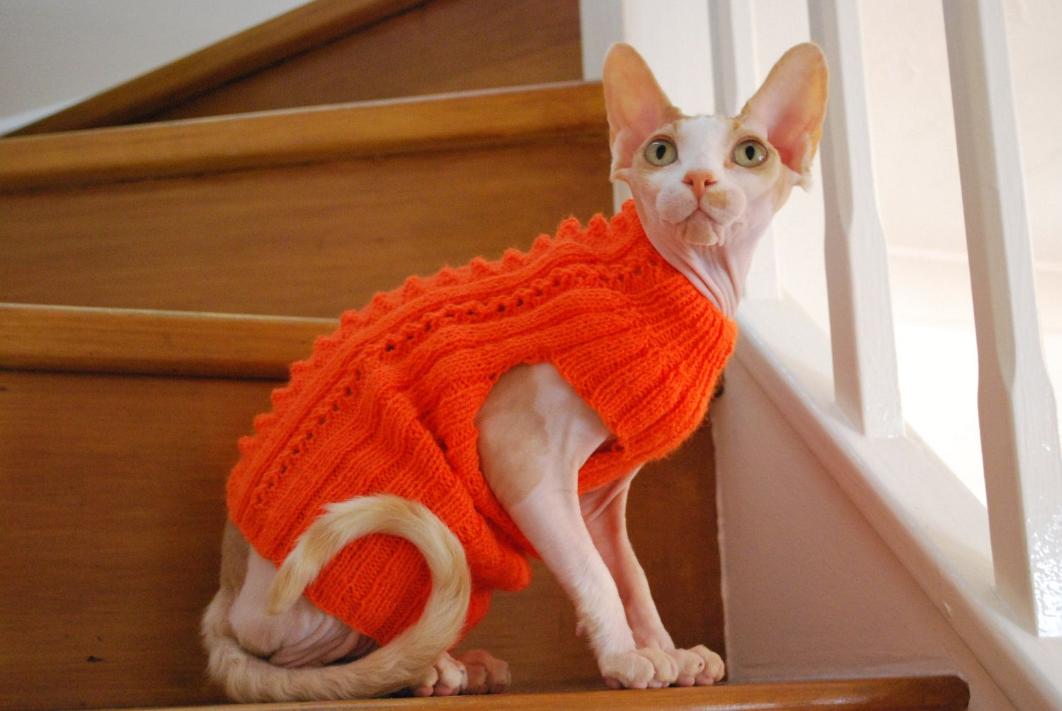 Handknitted sweater for small dogs or cats Kitten