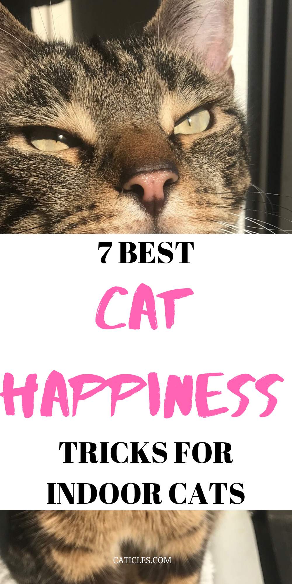 How To Keep A Cat Entertained In An Apartment Pro Tips First Time Cat Owner Indoor Cat Cat Care