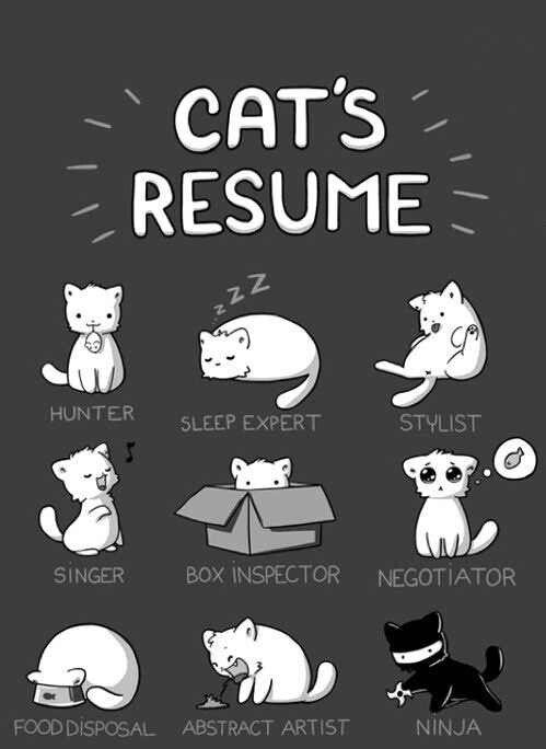 Catu0027s resume Cute Pinterest Resume, Cats and Cat - funny resume