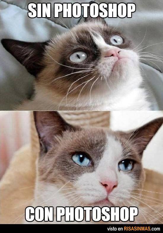 50 Chistes Graficos Para Principiantes Grumpy Cat Cat Memes Grumpy Cat Meme