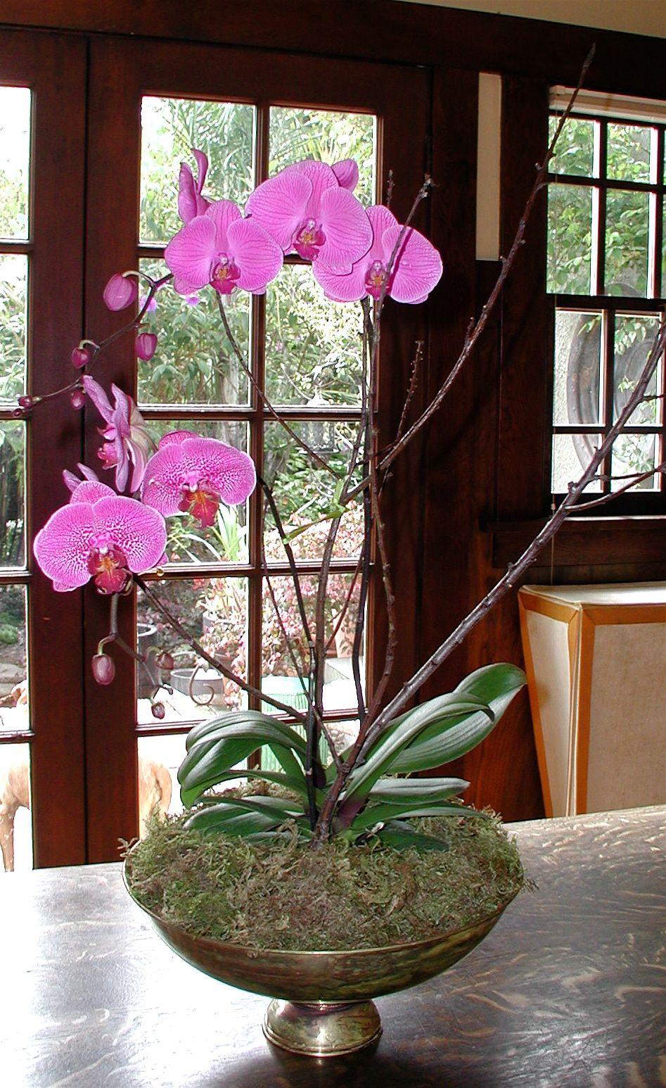Fabulous farmers market orchids orchid care orchids