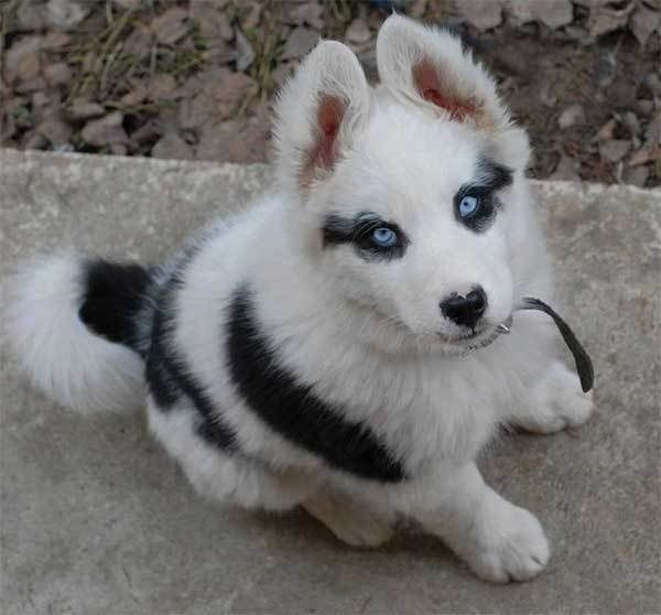 A Pup That Will Forever Have Winged Eyeliner Cute Animals