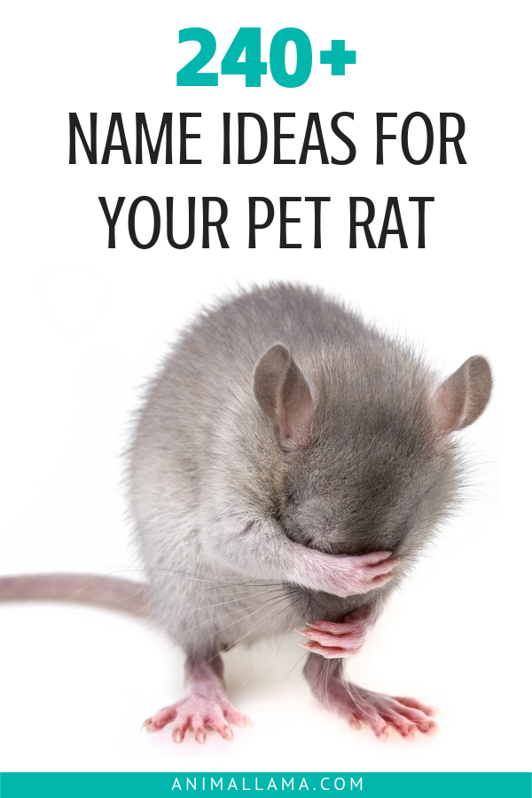 700 Pet Rat Names Disney Famous Rats Pair Names Black White Rat Names Animallama Pet Rat Cages Cute Pet Names Pet Rats