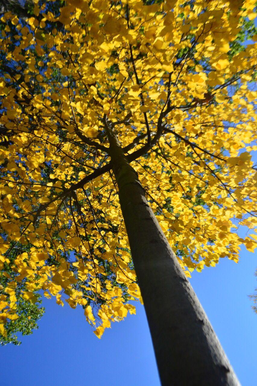 Gelb Herbst