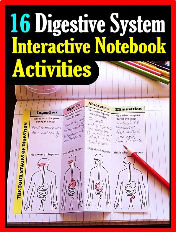 Digestive System Interactive Notebook Set Of 16 Foldable