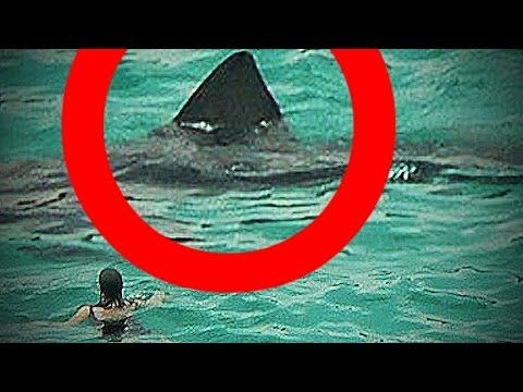 Real MEGALODON shark sightings CAUGHT on camera!? (BIGGEST SHARKS in