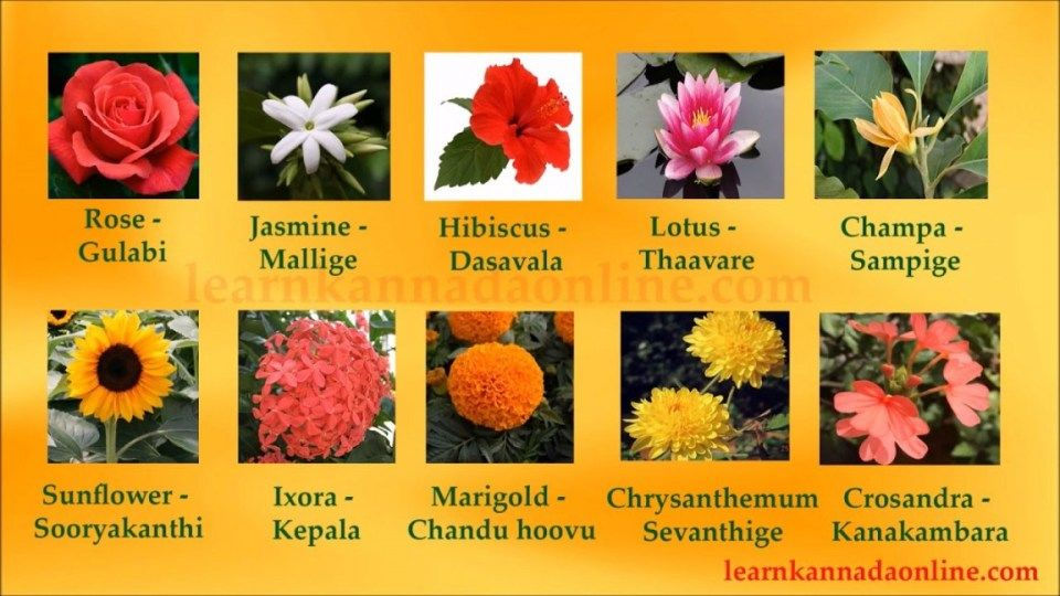 Heres What No One Tells You About Lily Flower Name In Kannada Lily Flower Name In Kannada Https I Flowers Name In English Flower Names Daisy Flower Meaning