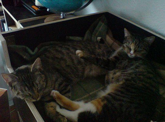 KittyCastle3