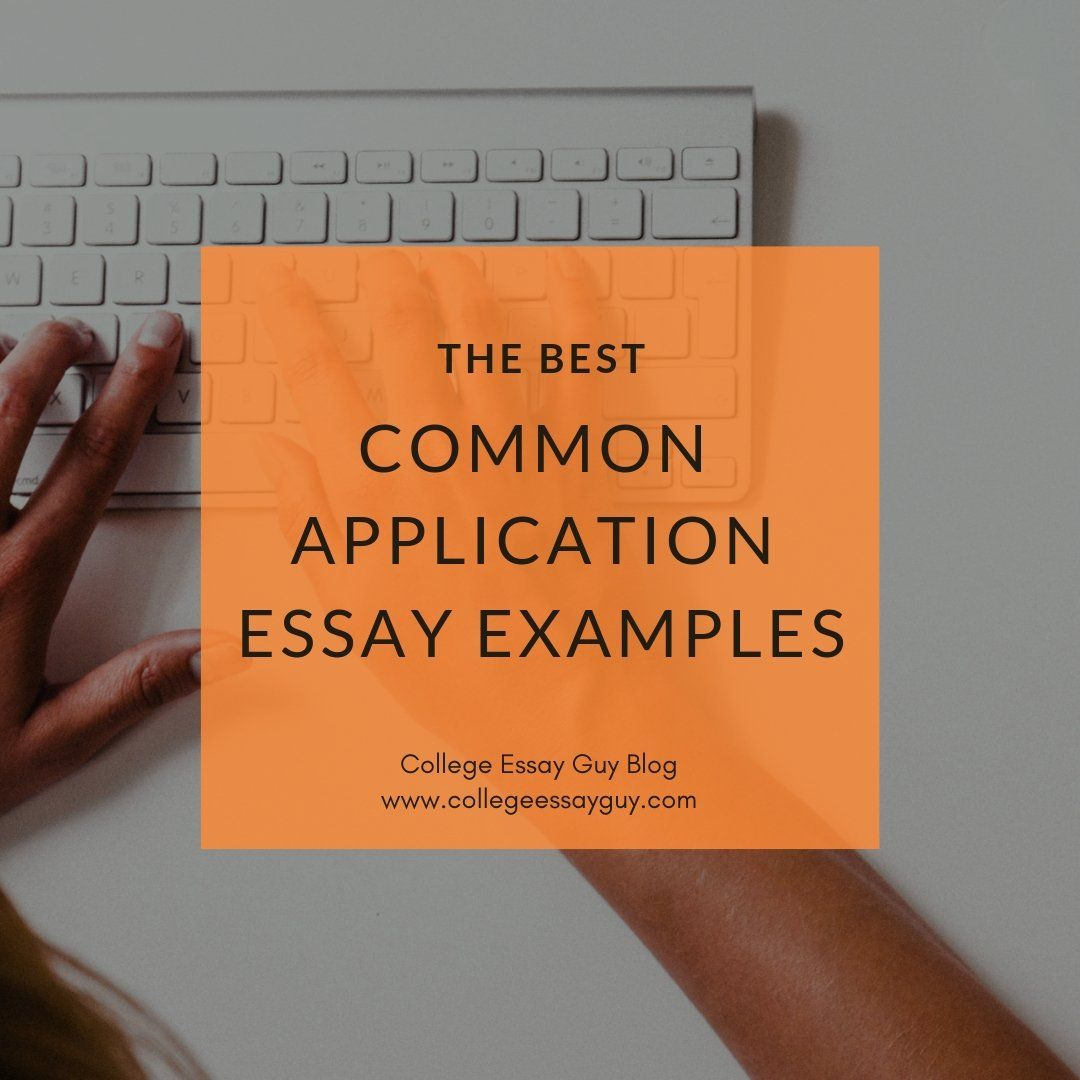 The Best Common App Essay Examples Common app essay