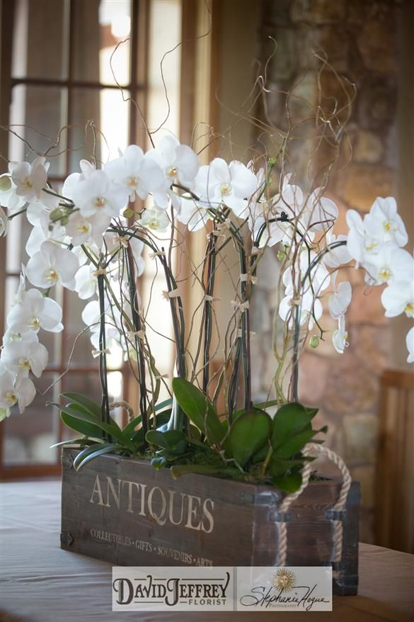 Amazing Large Orchid Planters Google Search Orchid