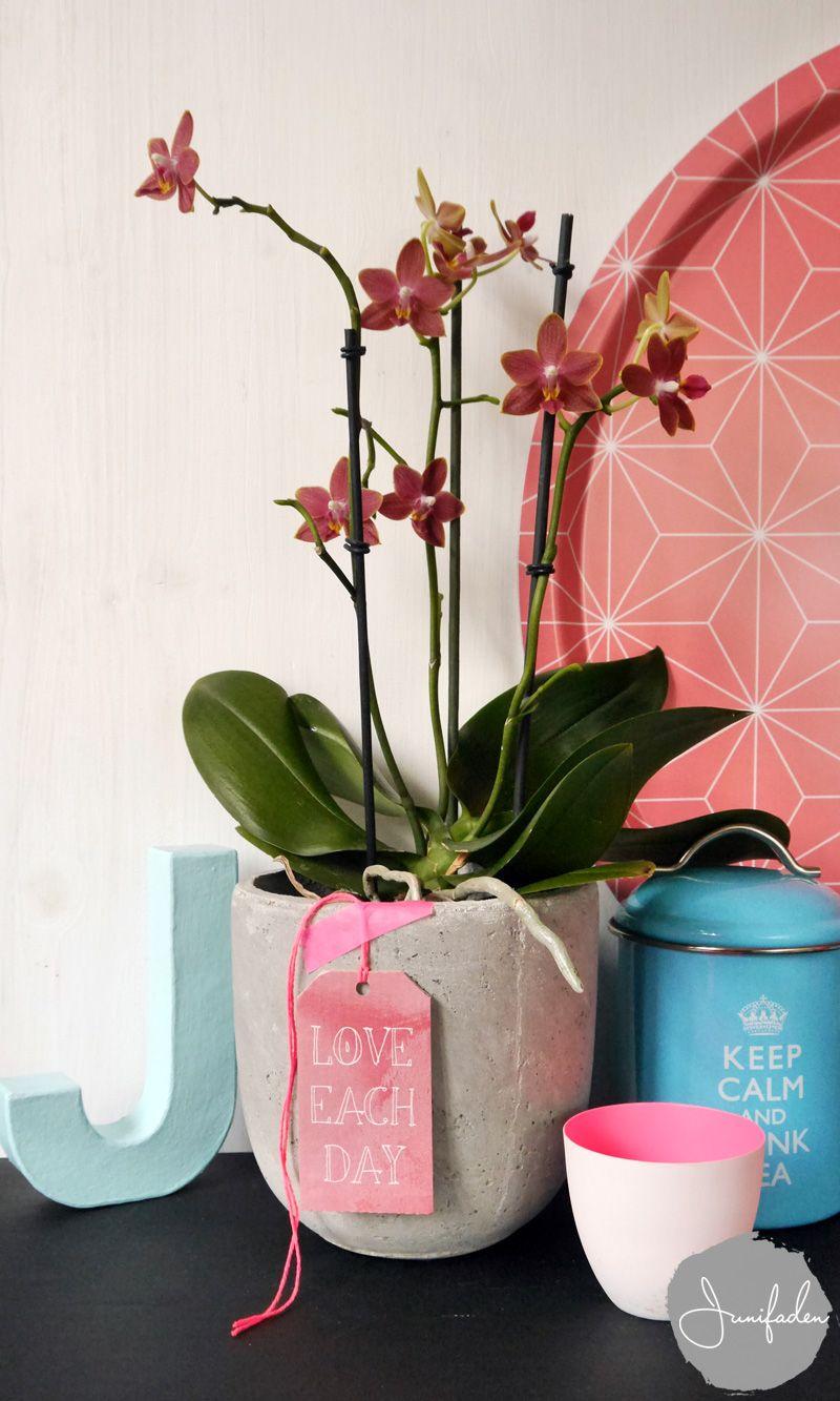 Urban Jungle Bloggers: One Plant - Three Stylings via Junifaden