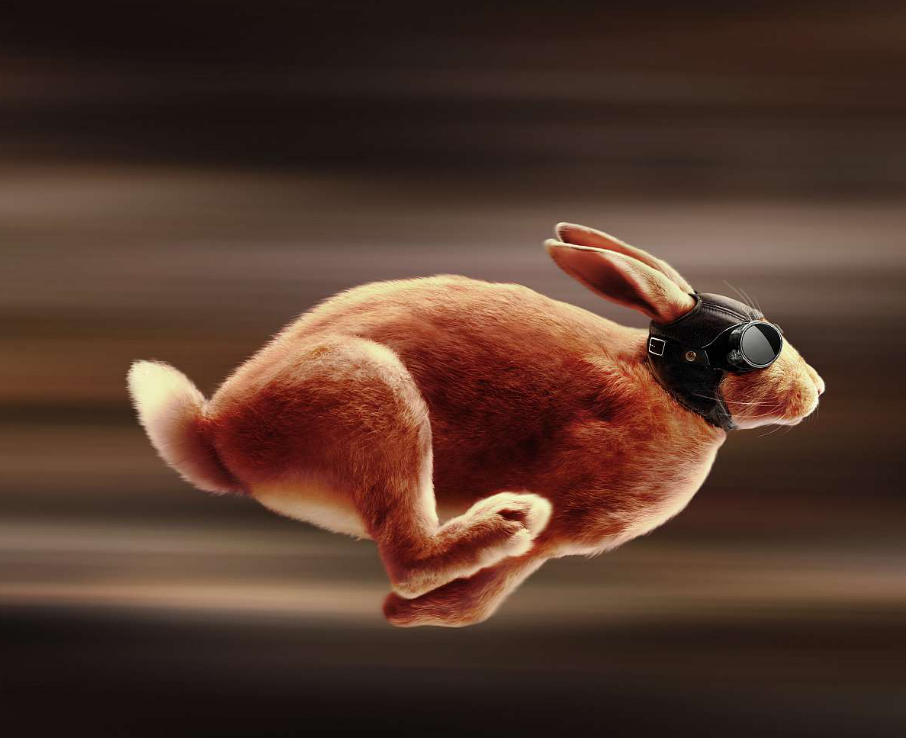 всего виновниками картинка беги кролик беги настоящее время цинния