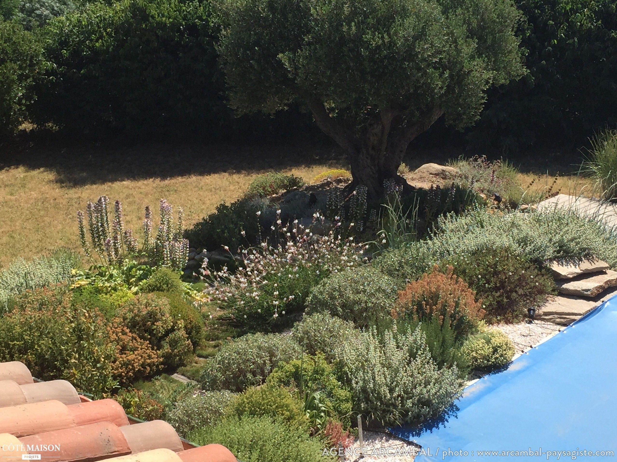 jardin sec autour d 39 une piscine dans un espace naturel espace ext rieur jardin par c t. Black Bedroom Furniture Sets. Home Design Ideas