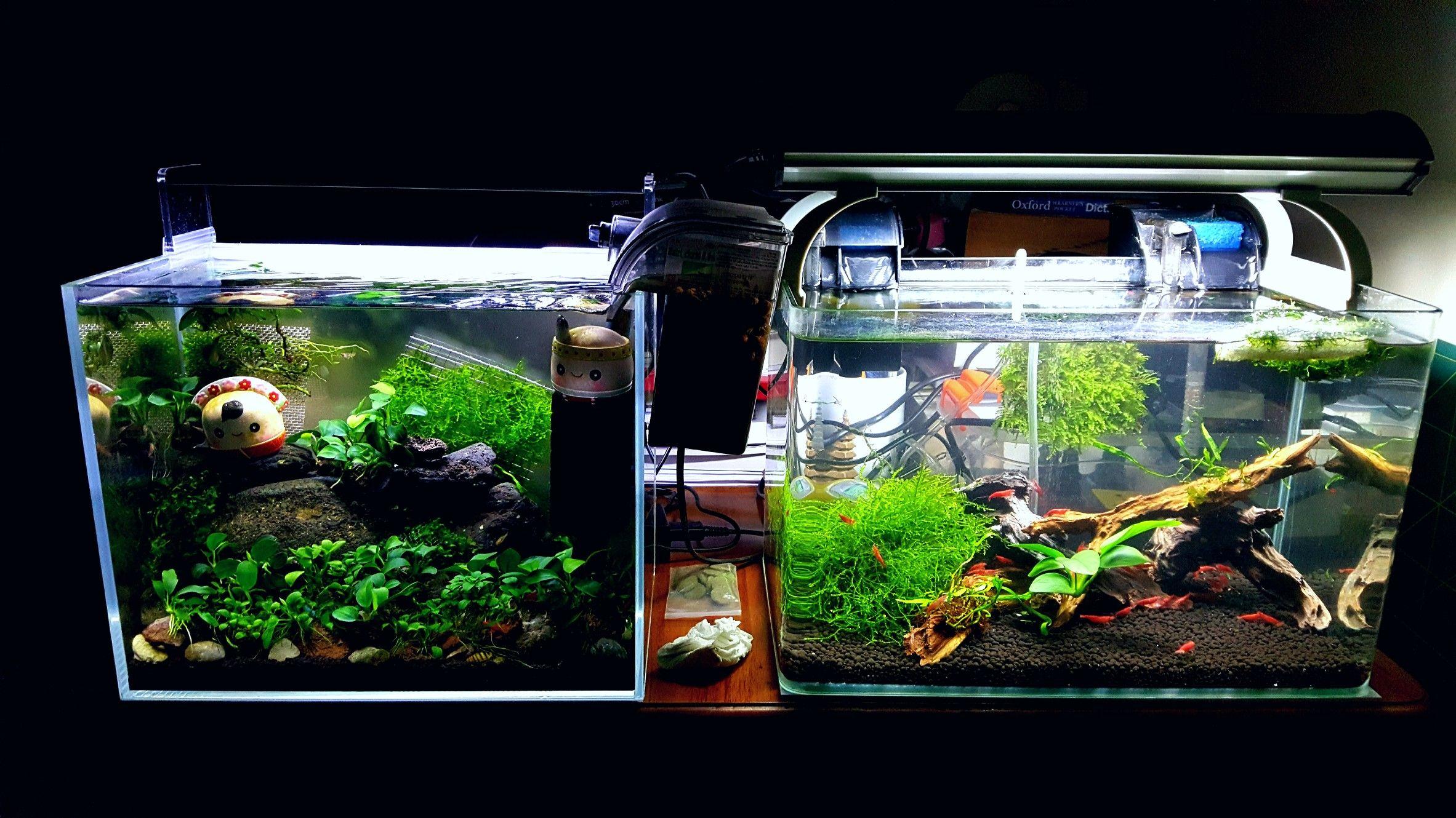 0c861495d979b398639baff6f2869c81 Luxe De Crevette Aquarium Des Idées
