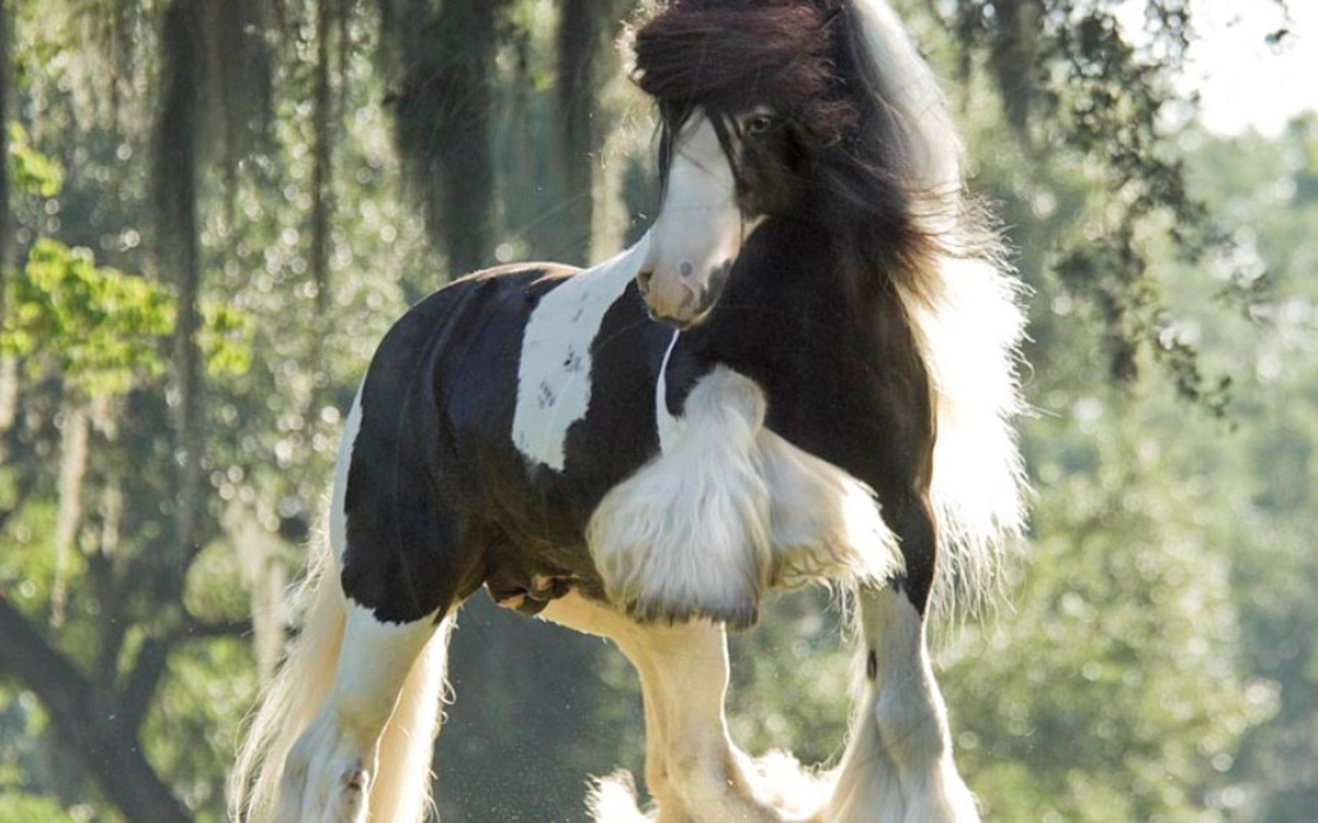 Cool Wallpaper Horse Tinker - 0c861957074fed2a7801f0540be96475  Pictures_142279.jpg