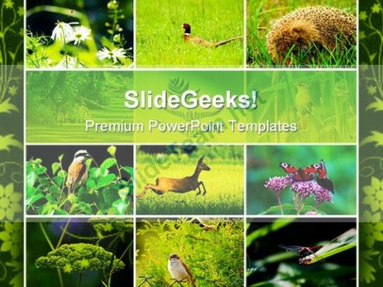 Wild Nature Animals Powerpoint Templates And Powerpoint
