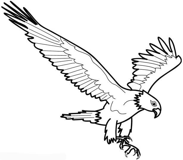 eagle coloring pages 615×540 Free Coloring Pages Downloads - new eagles to coloring pages