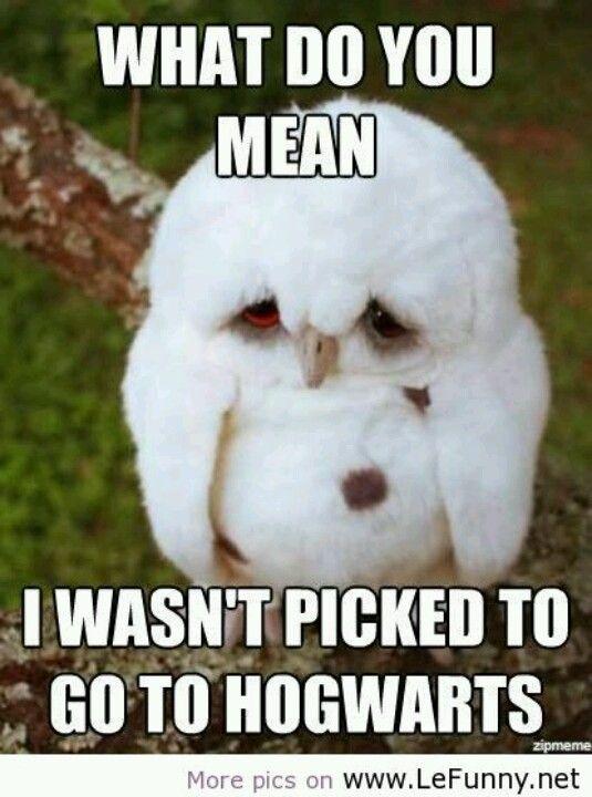 So cute! Harry Potter Owl  #Owl #Potter #Cute