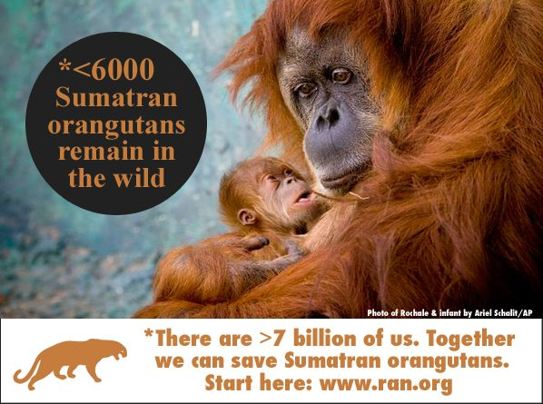 Take A Stand With Ran Help Save This Critical Habitat At Ran Org