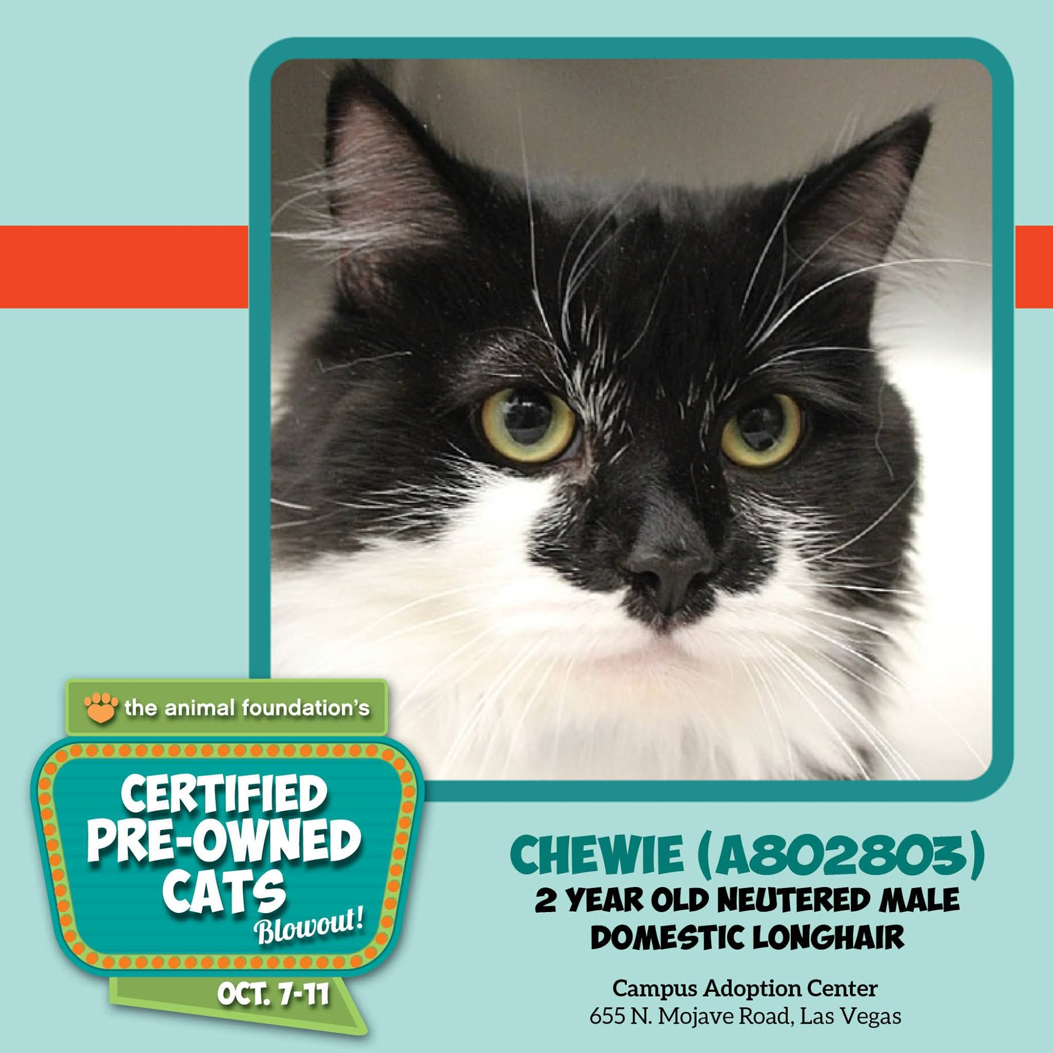 Only A Few Hours Left To Adopt A Fee Waived Cat Great Cats Like Chewie Are Waiting For You At Our Campus Adoption Center Open Kittens Cats Cat Adoption