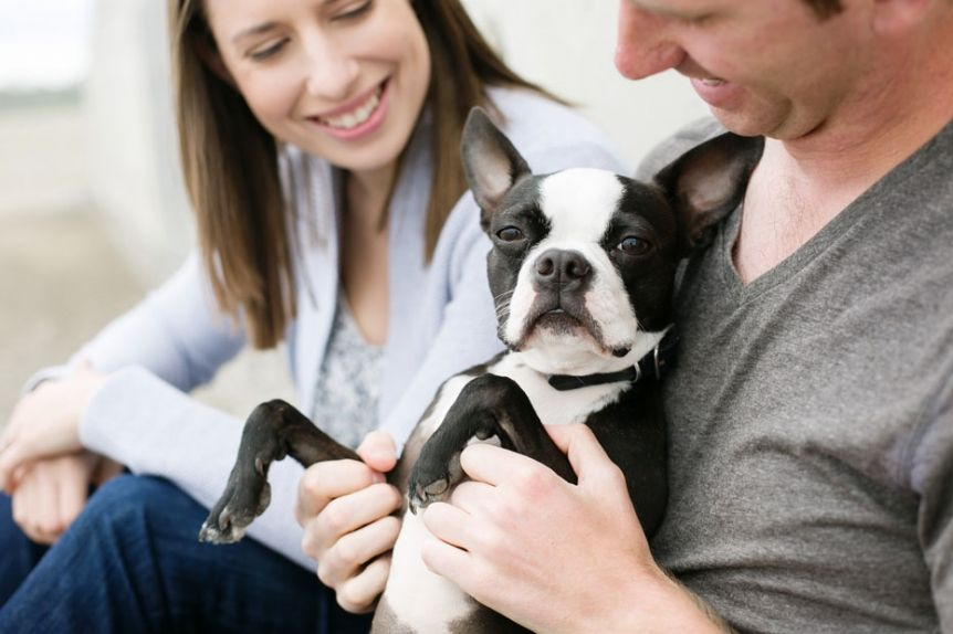 A Newly Engaged Couple With Their Cute Boston Terrier Puppy