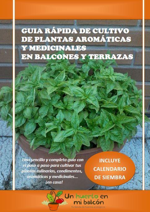 Cómo Cultivar Plantas Aromaticas En Macetas Plantas