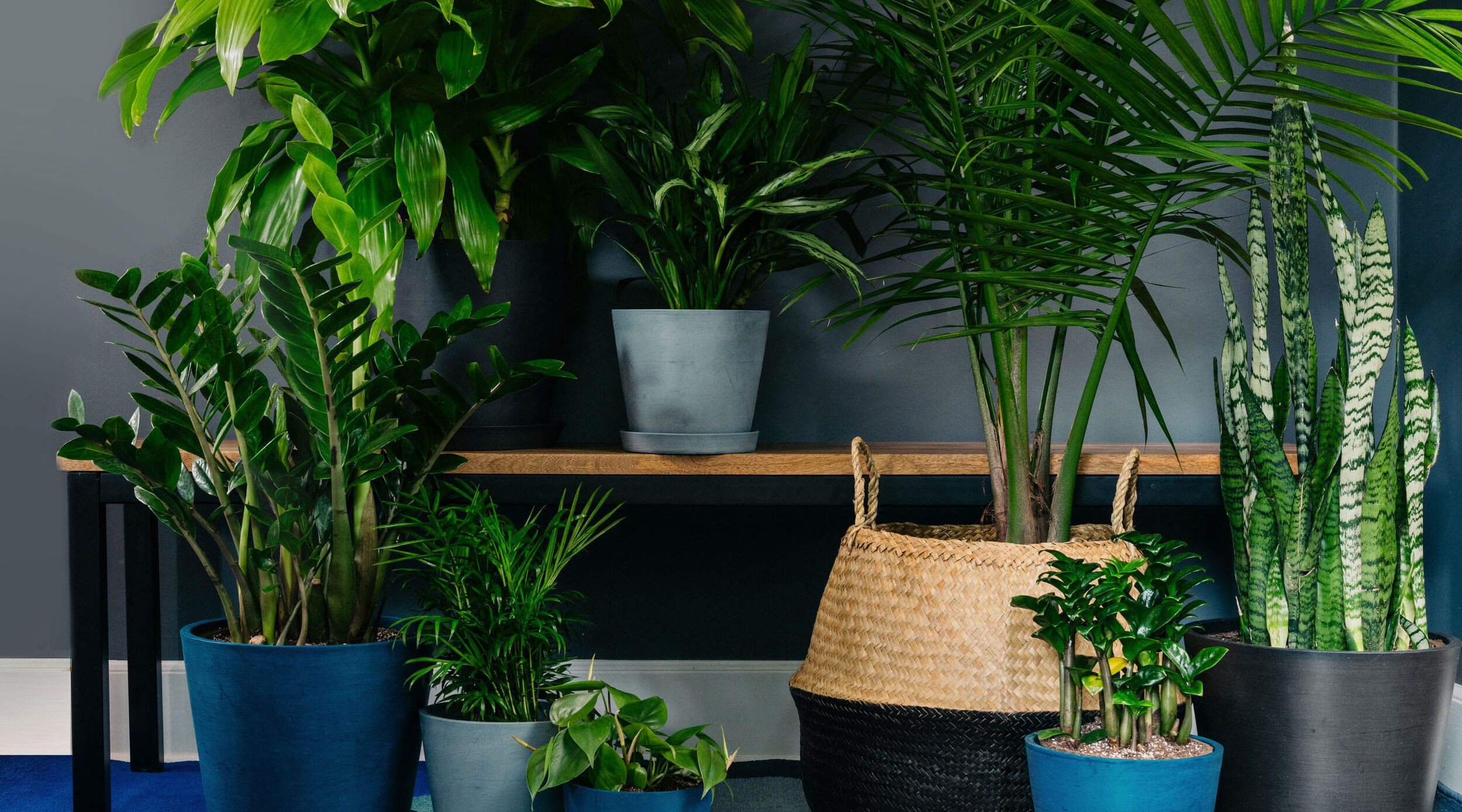 Bloomscape Living Room Ready Plants Delivered To Your Door In
