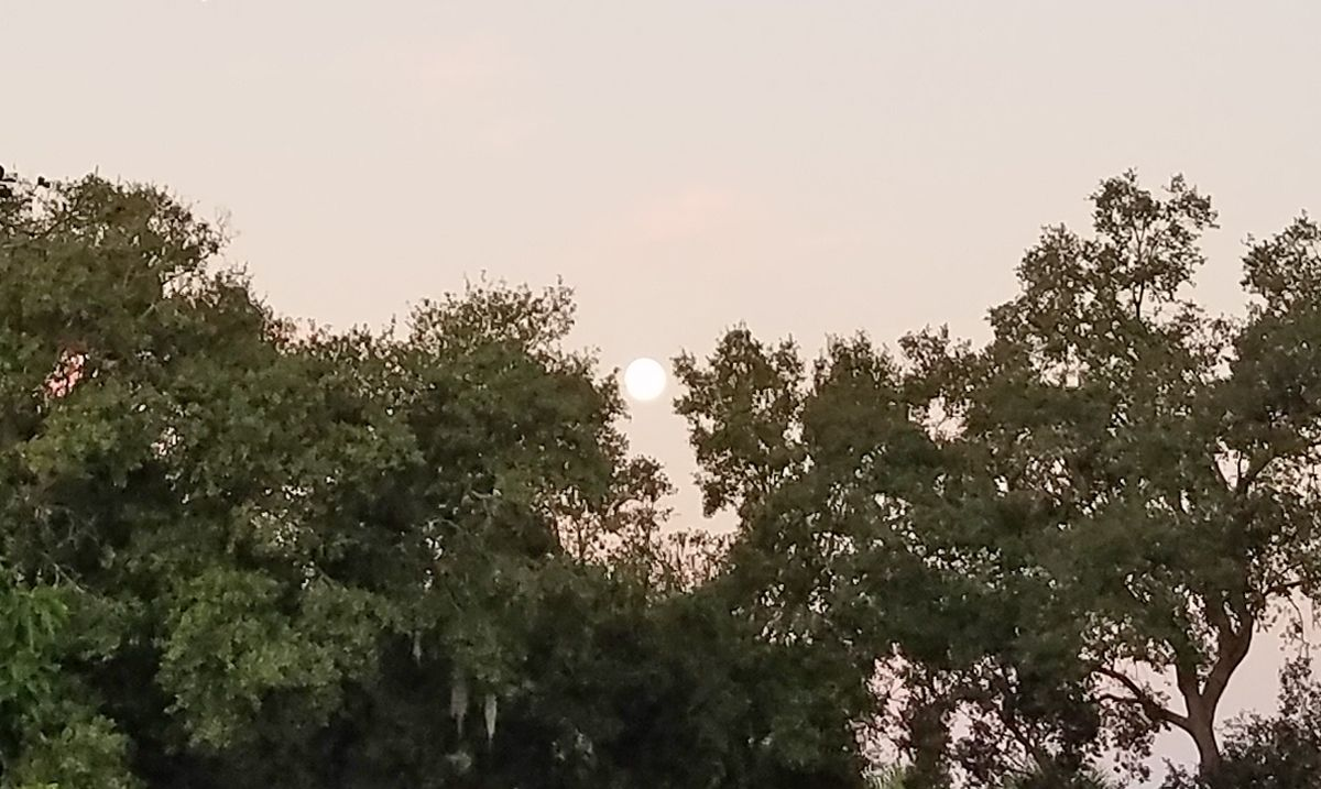 A full moon sets behind a line of trees early today (Oct