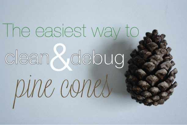 how to clean the pine cones
