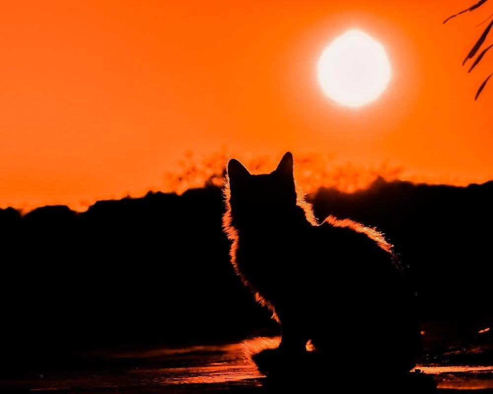 Autumn Cat Cats, Wildlife photography, Dream meanings