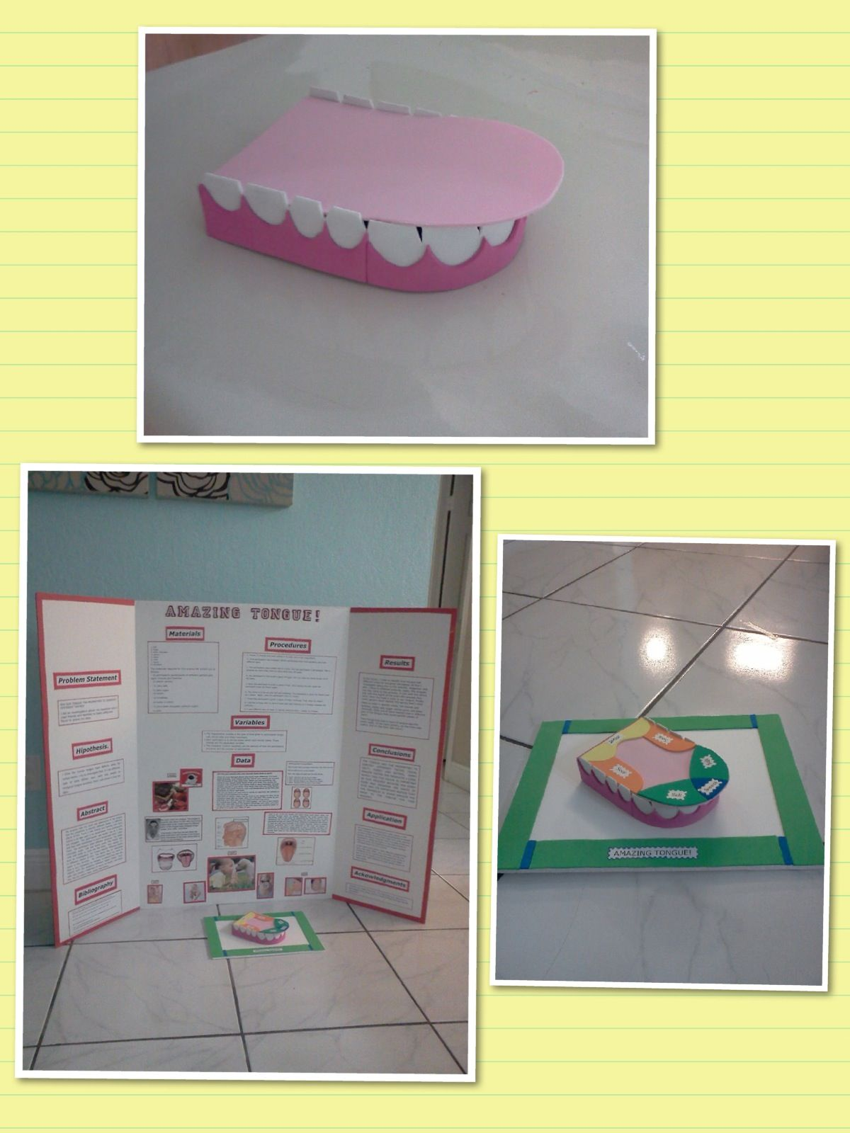 Tongue Taste Areas School Project Ideas Good Luck 4th
