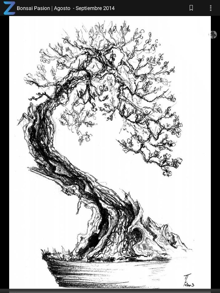 pin by hector melendez on bonsai drawings