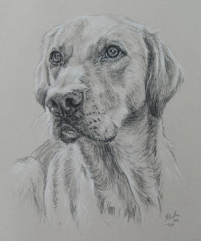 """Dog portrait drawing of Retriever """"Jeb"""", 10x12"""""""