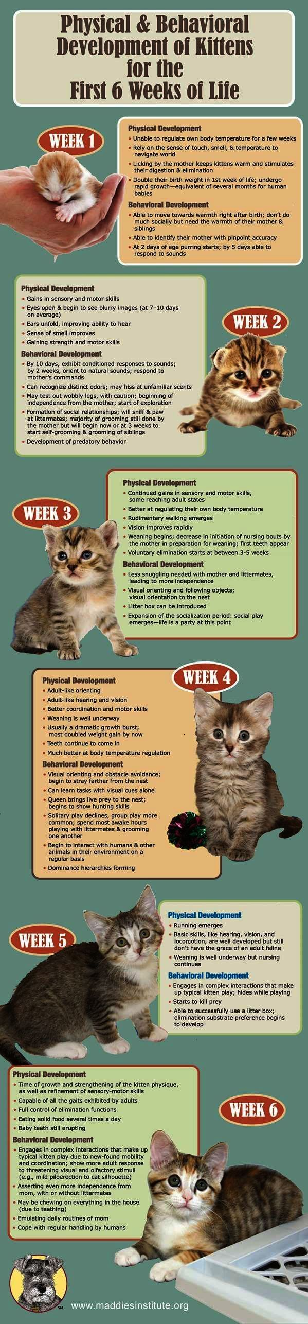 Physical And Behavioral Development Of Kittens Future Tech Veterinary Technician Cat Care Kittens Kitten Care