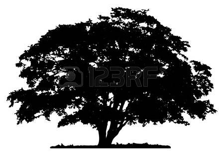 Oak Tree Silhouette Tree Silhouette On White Background Many Great Tree Patterns Oak Tree Silhouette Tree Silhouette Tree Art