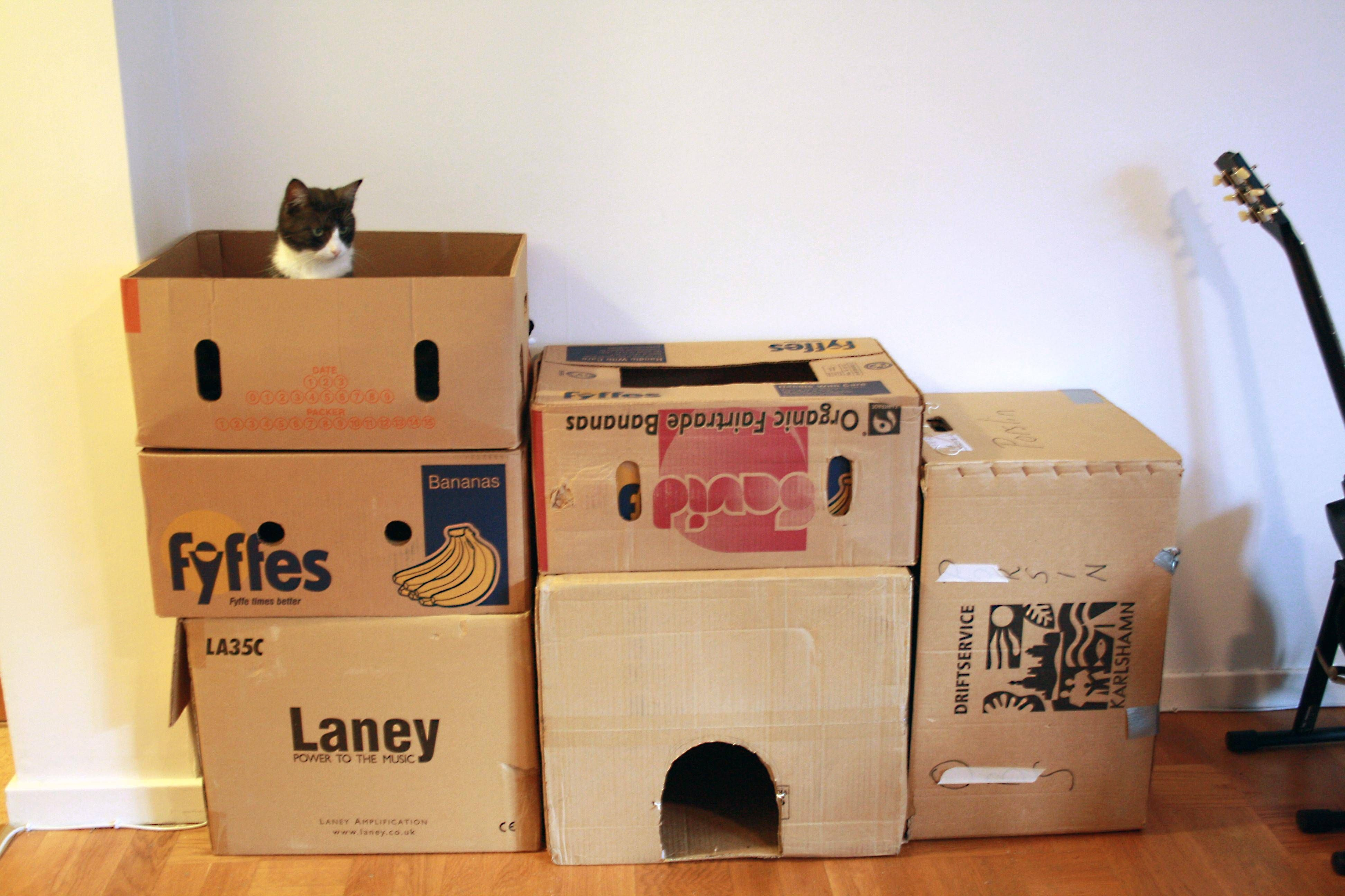 I'm not even sure she is happy about her boxfort - Imgur