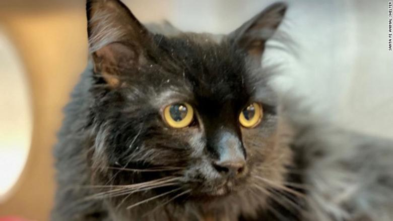 A cat missing for five years was found 1,200 miles away