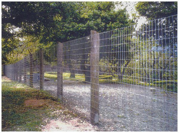 27 Unique Privacy Fence Ideas You May Consider Privacy