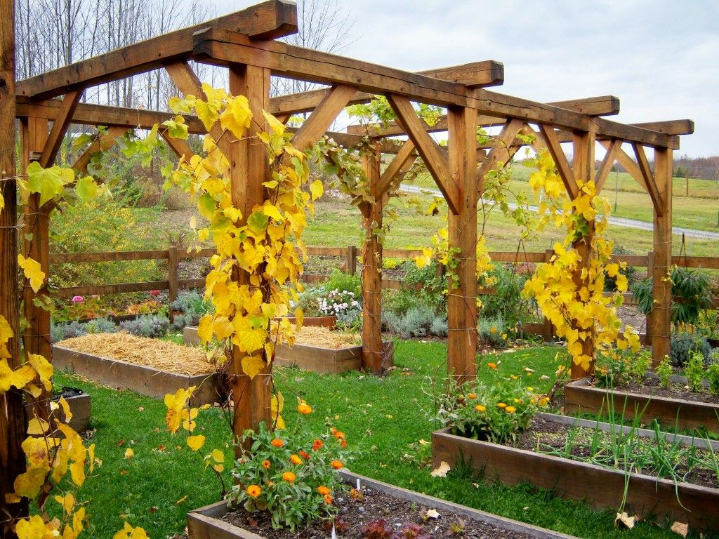 Great Entertaining  Ideas Grape Arbor