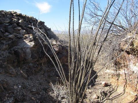 SUMMERTIME MINE Lode Mining Claim Apache No 2 Hidalgo County New M