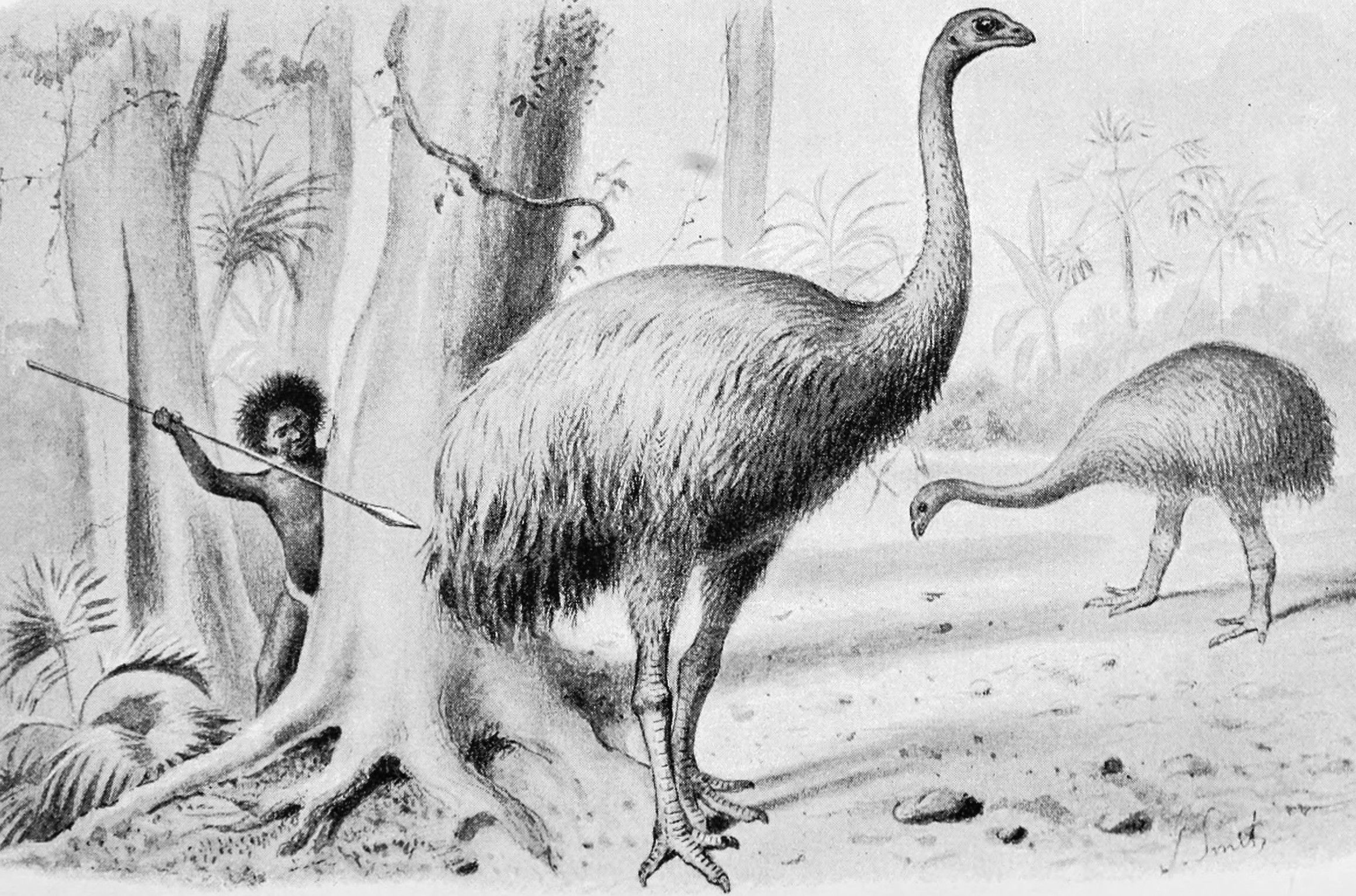 New Zealand's largest bird was hunted to extinction by the early Maori's. |  Extinct animals, Extinction, Animals