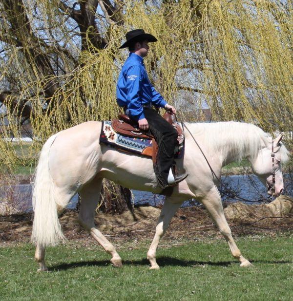 San Peppy Scotch - Cremello Quarter Horse Stallion in Dodgeville, Wisconsin, 15.3 hh, $700 for breeding