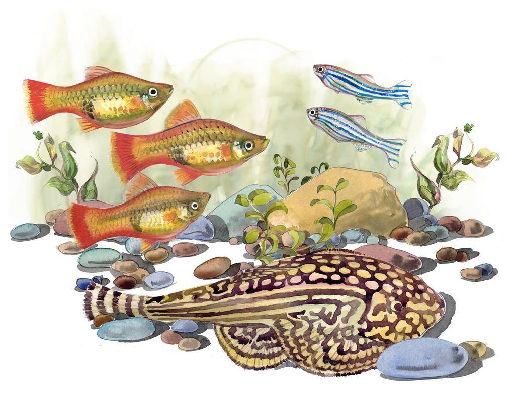 Liam O Farrell On Fish Illustration Illustration Illustration