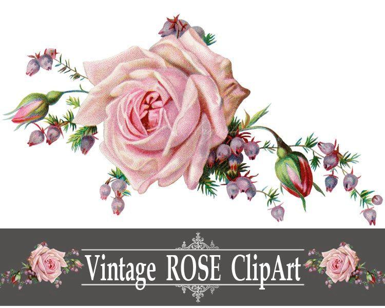 Vintage Rose Png Clip Art Printable Image Instant Download Digital Design Graphic Illustration Pink Flowers Clipart Roser
