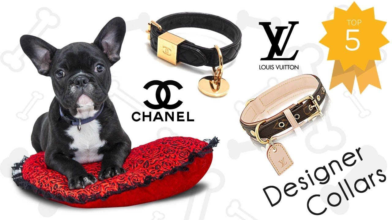 2b442c193cfec Luxury Designer Dog Collars and Accessories - Check the top 5 ...