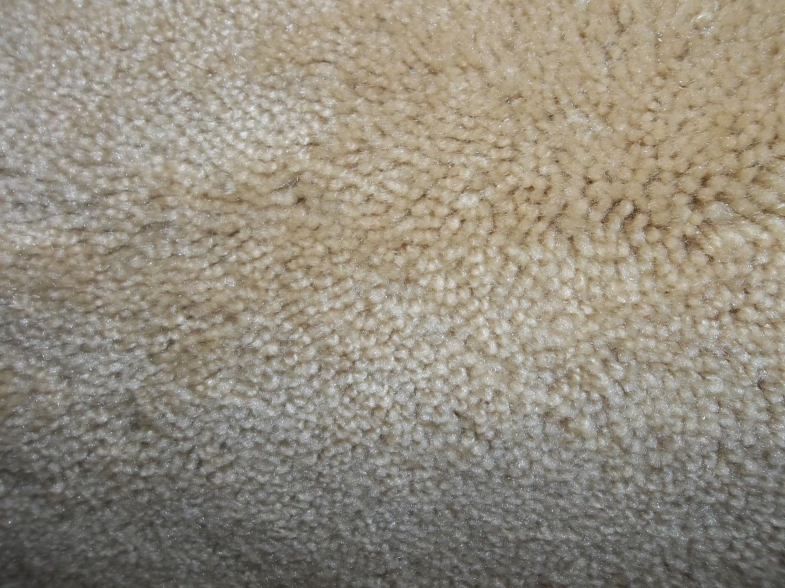 Wall-to-Wall Carpeting 175820: Wall To Wall Carpet Chalky -> BUY IT NOW ONLY: $149 on eBay!