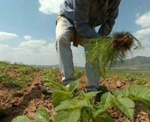 El Estado mantiene una partida de tres millones para fomento empleo agrario - http://gd.is/QEQfRO
